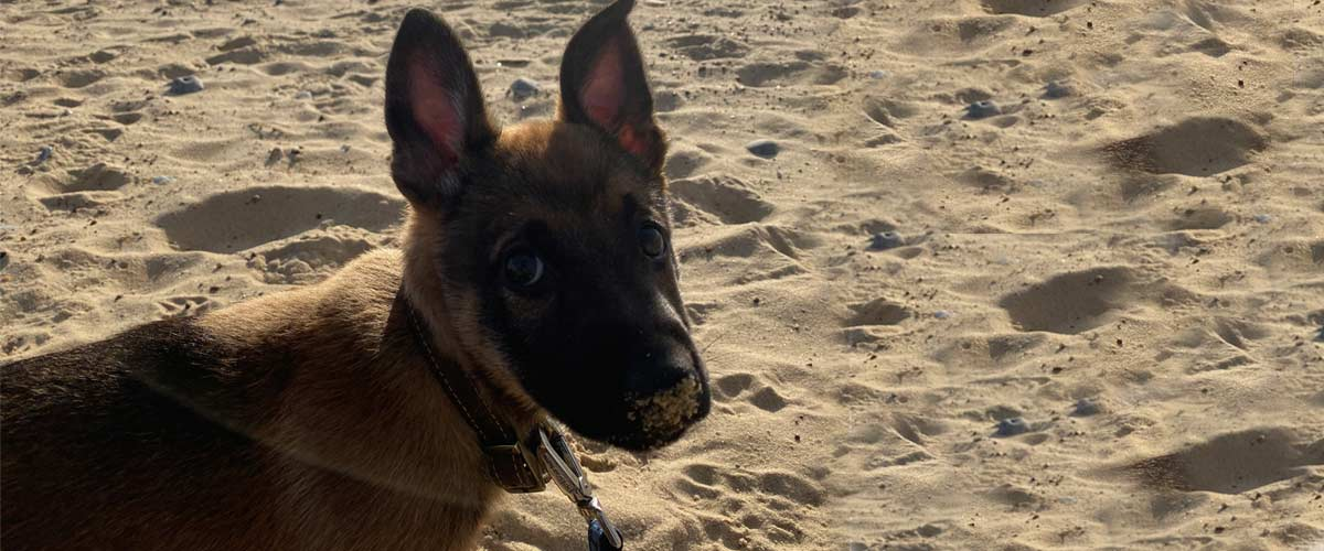 Caister on Sea Dog Friendly Beach | Image of Dog on sand